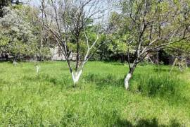 Land For Rent, Digomi 1 - 9