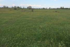 Land For Sale, Isani
