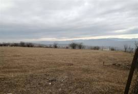 Land For Sale, Nichbisi