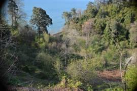 Land For Sale, Tsikhisdziri