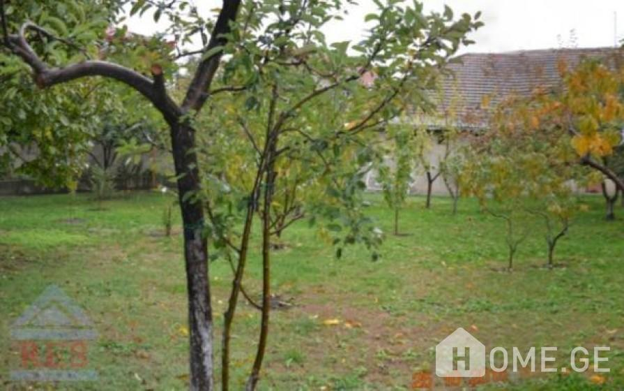 House For Sale, Ortachala