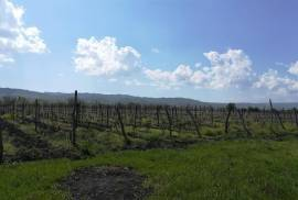 Land For Sale, Dzveli Anaga