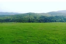 Land For Sale, Mukhatgverdi